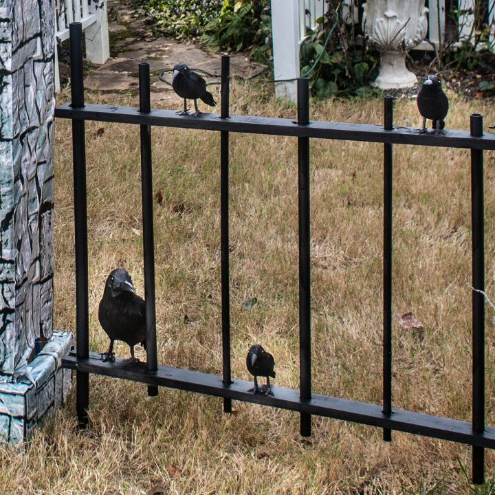 Fake crows sitting on a Halloween cemetery fence