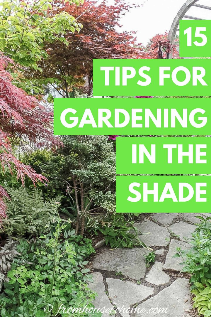 15 tips for gardening in a shade garden