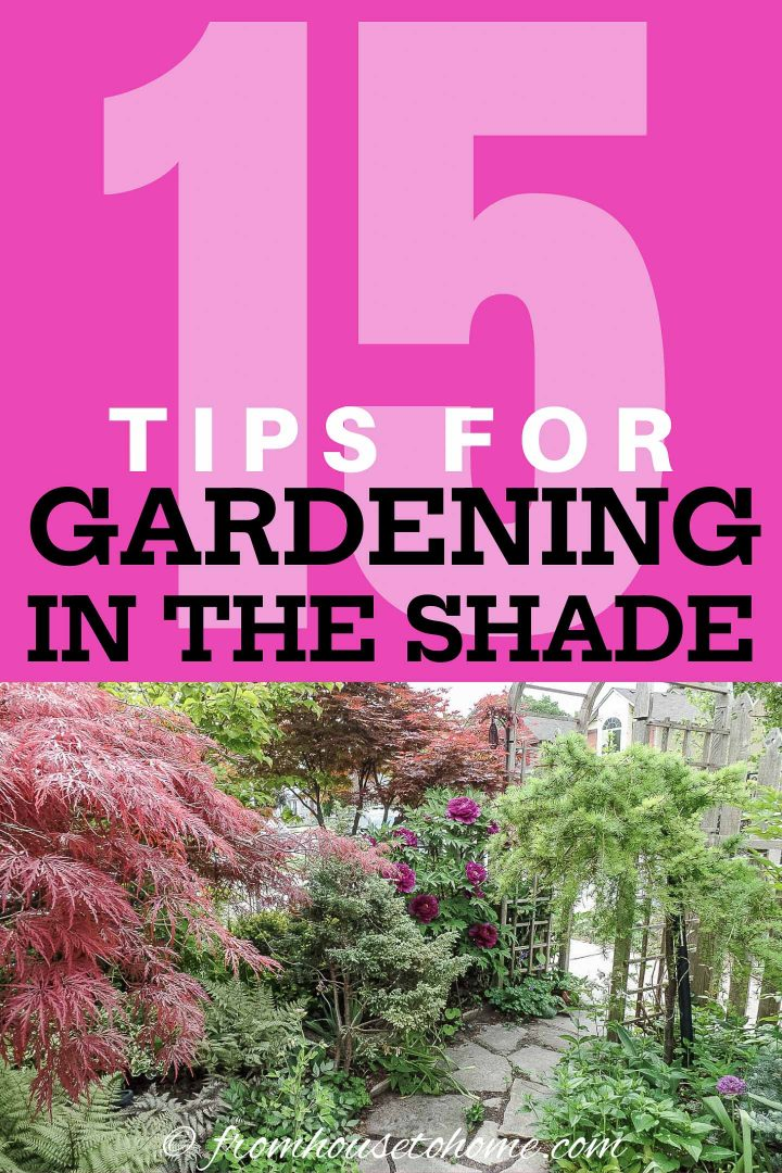 15 tips for gardening in the shade