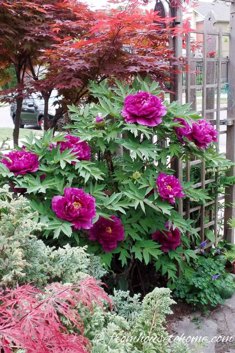 Shade Loving Shrubs 11 Beautiful Bushes To Plant Under