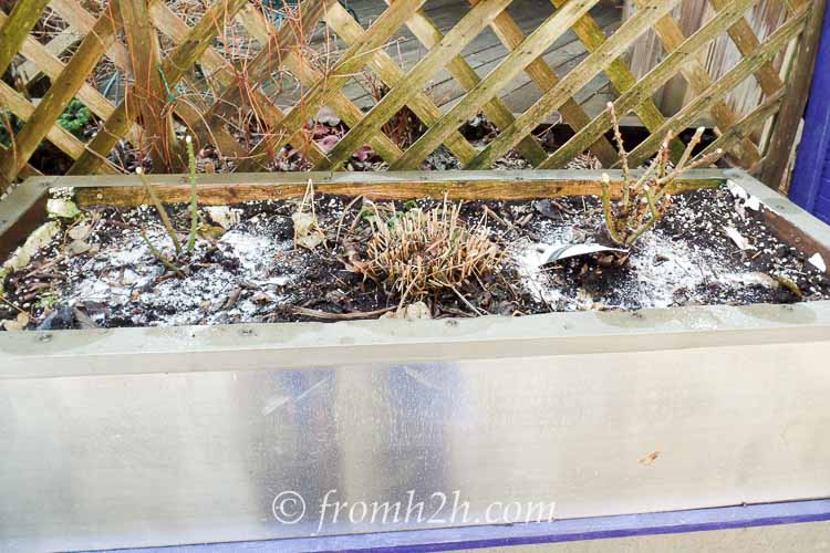 Cut back perennials | How To Get Your Garden Ready For Spring