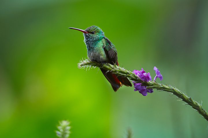Hummingbird on a tree branch ©petrsalinger - stock.adobe.com