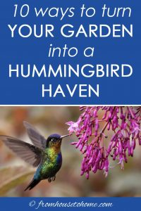 ways to turn your garden into a hummingbird haven