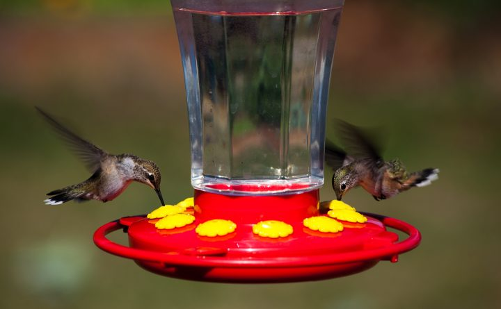Two hummingbirds eating from a hummingbird feeder