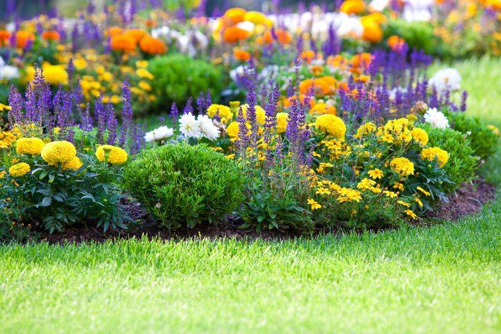 Brightly-colored flower garden
