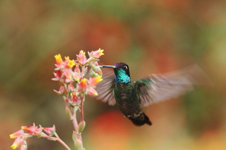 Hummingbird beside an orange and red flower
