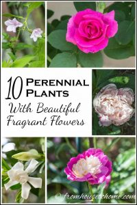 10 Perennial Plants With Beautiful Fragrant Flowers