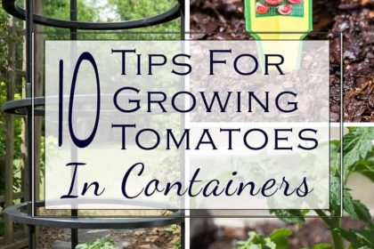 10 Tips For Growing Tomatoes In Containers
