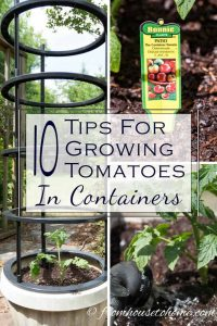 Growing Tomatoes In Containers With Success