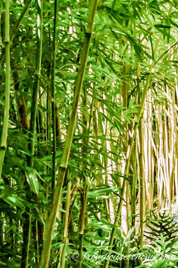 Avoid invasive palnts - Many bamboo species are very invasive | 10 Tips for creating a low maintenance garden