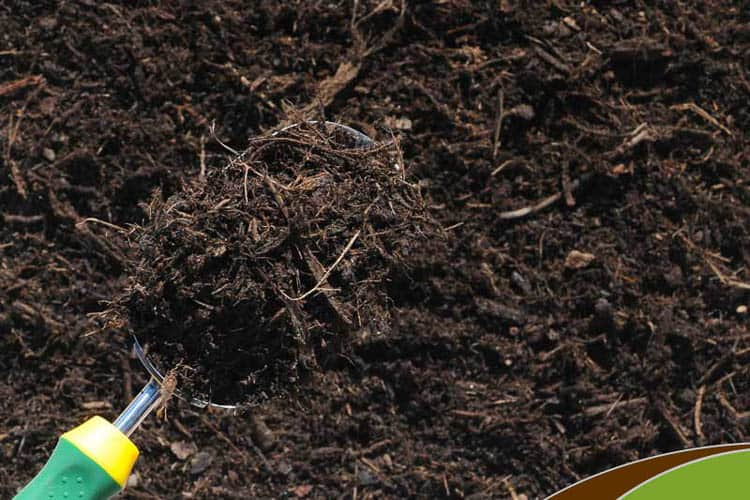 Mulching your garden helps keep moisture in the soil | 10 Tips for creating a low maintenance garden