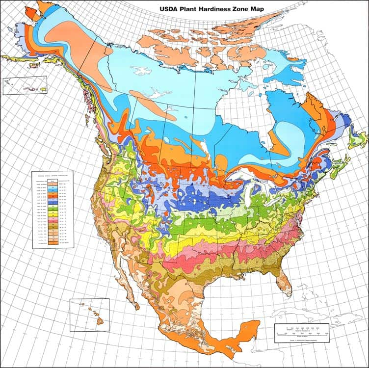 USDA Plant Hardiness Zone Map | 10 Tips For Creating A Low Maintenance Garden