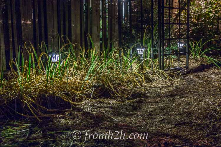 Solar lighting is easy to install | 10 Beautiful Ways To Light Your Garden