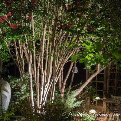 Uplighting interesting tree trunks