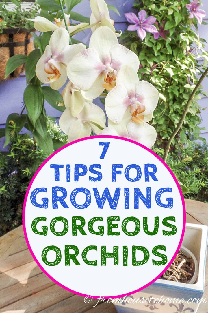 tips for caring for orchids