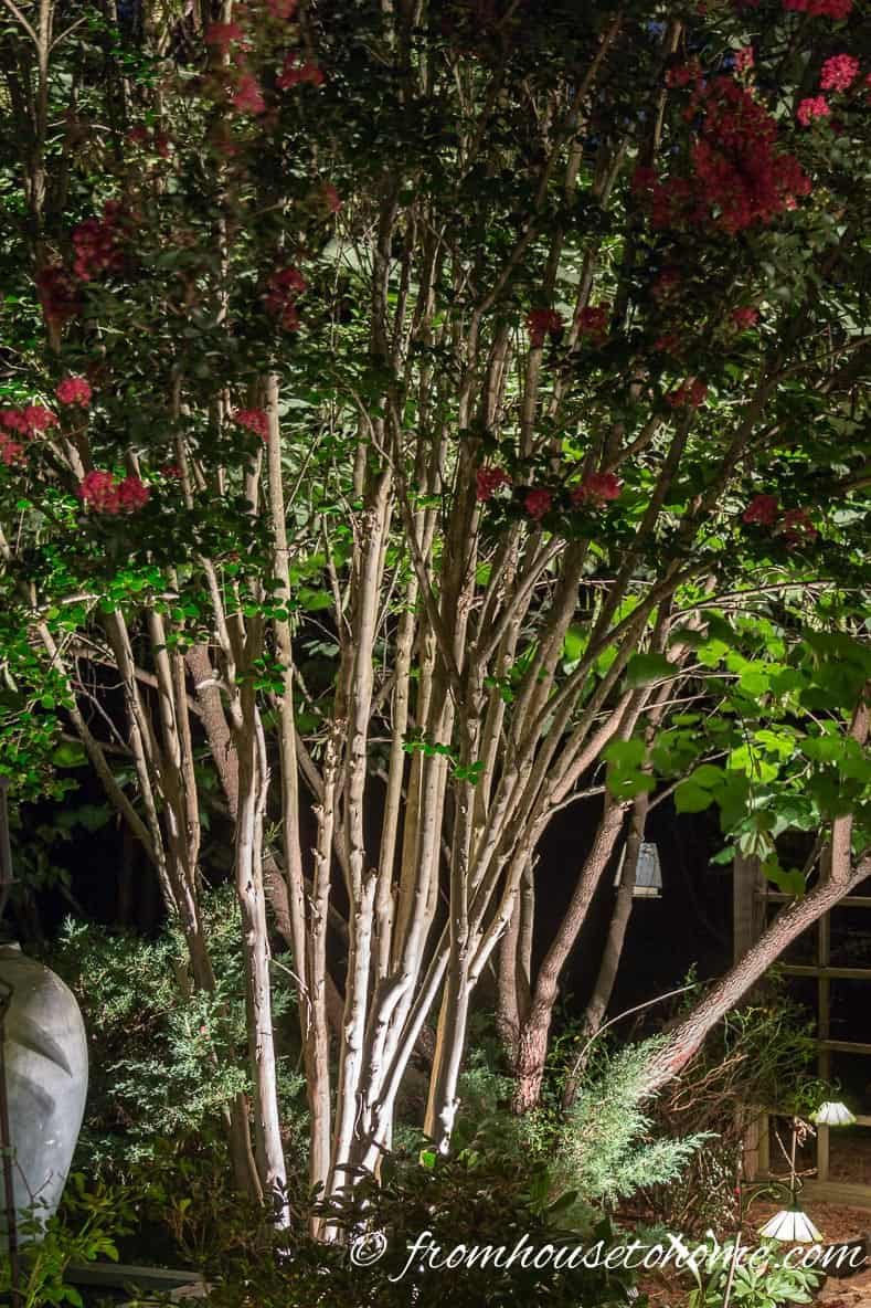 Uplight interesting tree trunks | 8 Landscape Lighting Effects And How To Use Them | Whether you're looking for DIY landscape lighting ideas for your front yard, backyard or walkway, this list will help! It shows you lots of ways to use both low voltage and solar lights in your garden or patio.
