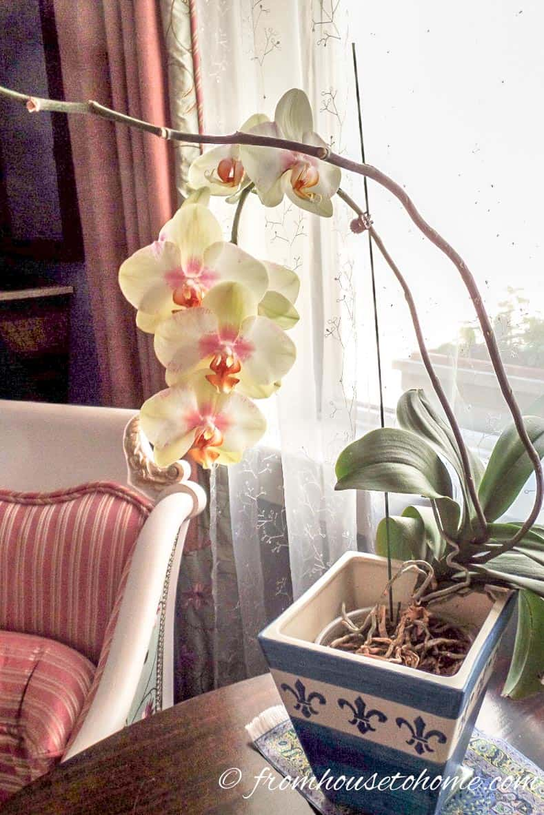 Orchids do not need a lot of light | 7 Surprising Things You Didn't Know About Caring For Orchids