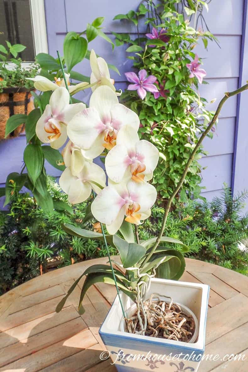 Orchids do not like to be re-potted | 7 Surprising Things You Didn't Know About Caring For Orchids