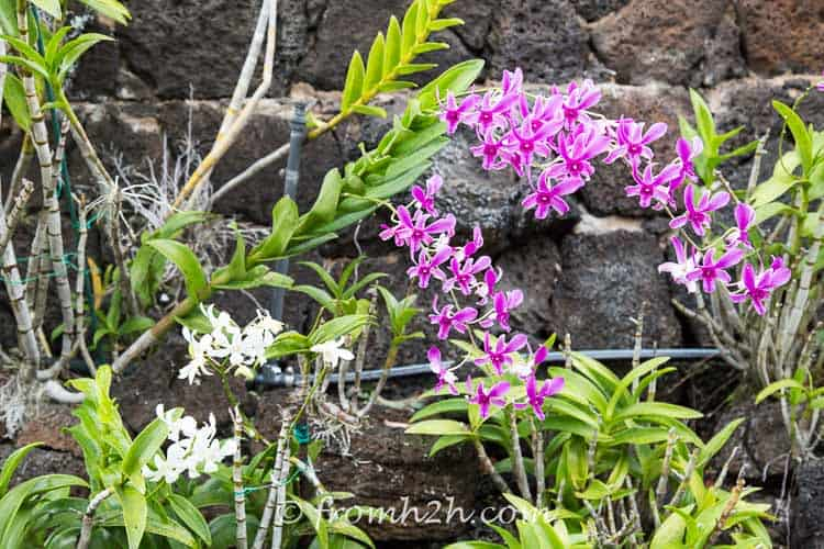 Orchid garden in Kauai | 7 Surprising Things You Didn't Know About Caring For Orchids