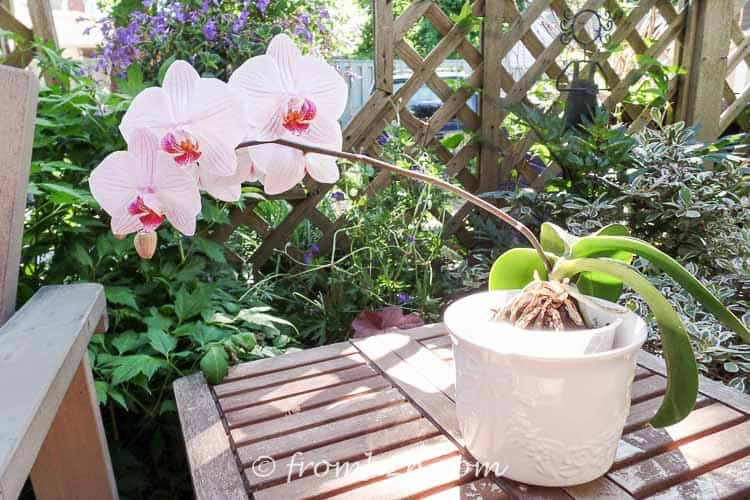 Orchids make great outdoor potted plants | 7 Surprising Things You Didn't Know About Caring For Orchids