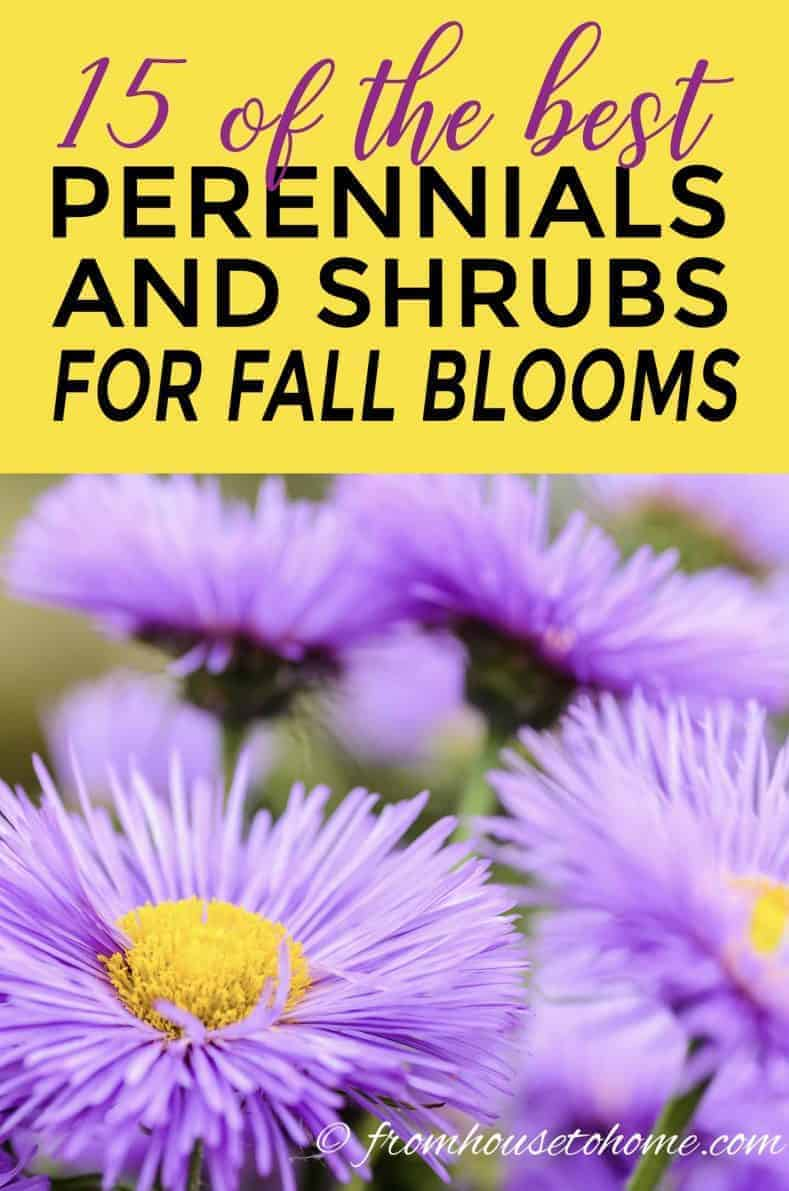 perennials and shrubs that bloom in fall