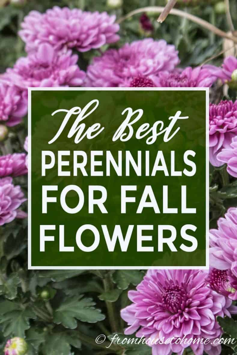 15 Of The Best Plants That Bloom In Fall Gardening From House To
