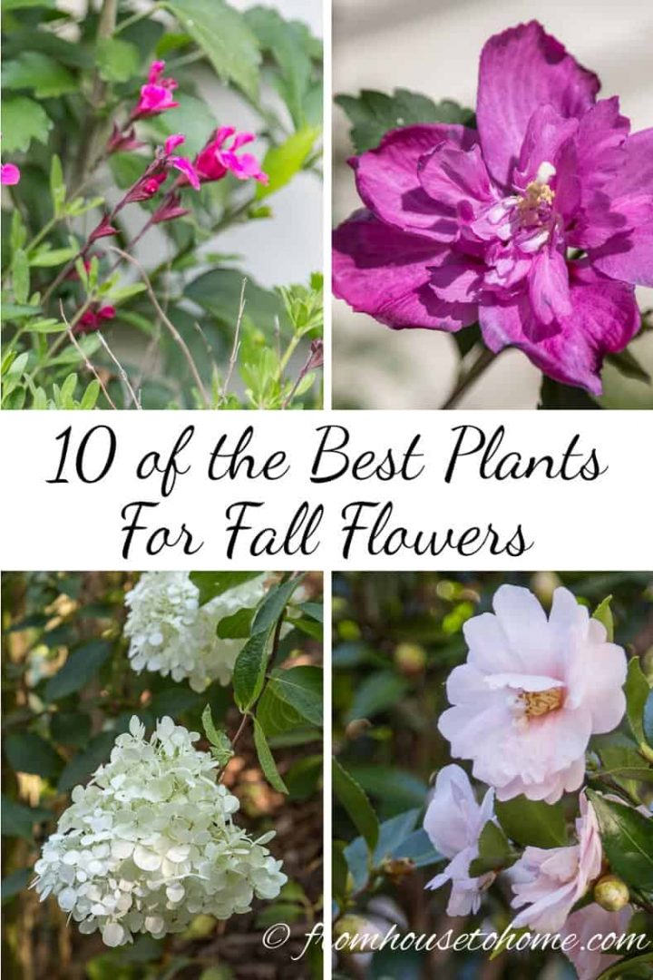 Best plants for fall flowers
