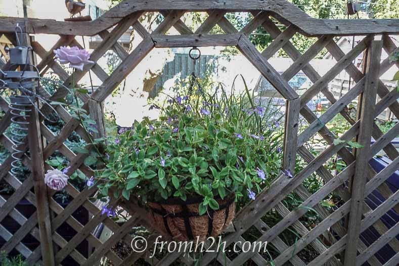 Holes in the fence provide a spot for hanging plants | How To Create a Relaxing Deck