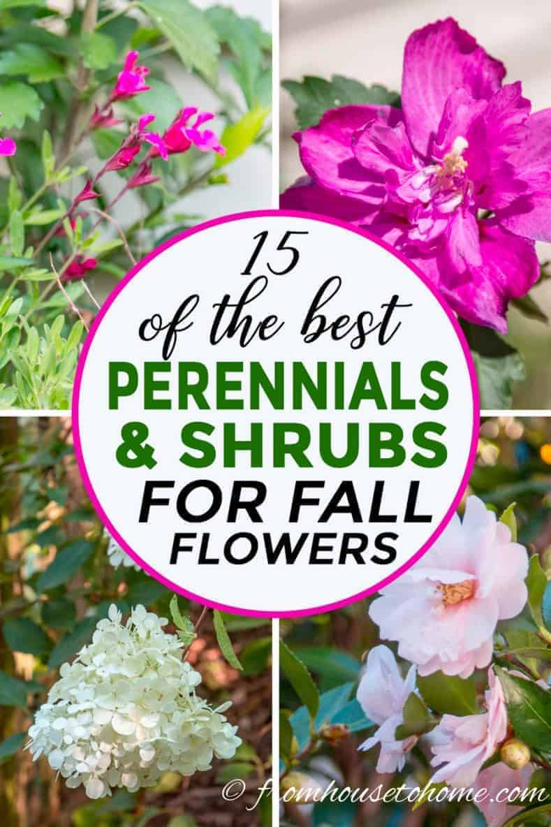 15 of the best plants that bloom in fall