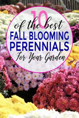 Perennials That bloom in fall