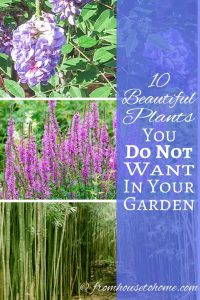 10 Beautiful Invasive Plants You Do Not Want In Your Garden