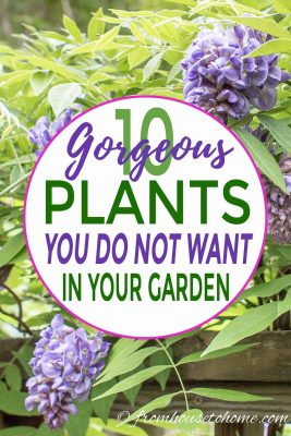 Invasive plants you do not want in your garden