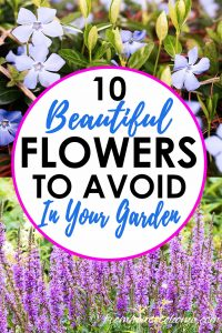 beautiful flowers to avoid in your garden