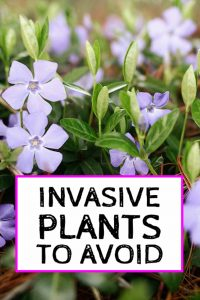 invasive plants to avoid