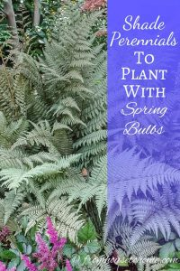 Shade Perennials that are companion plants for Spring Bulbs