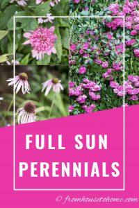 full sun perennials
