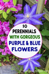 10 perennials with gorgeous purple and blue flowers