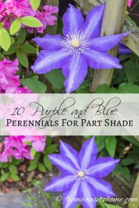 10 purple and blue pernnials for part shade