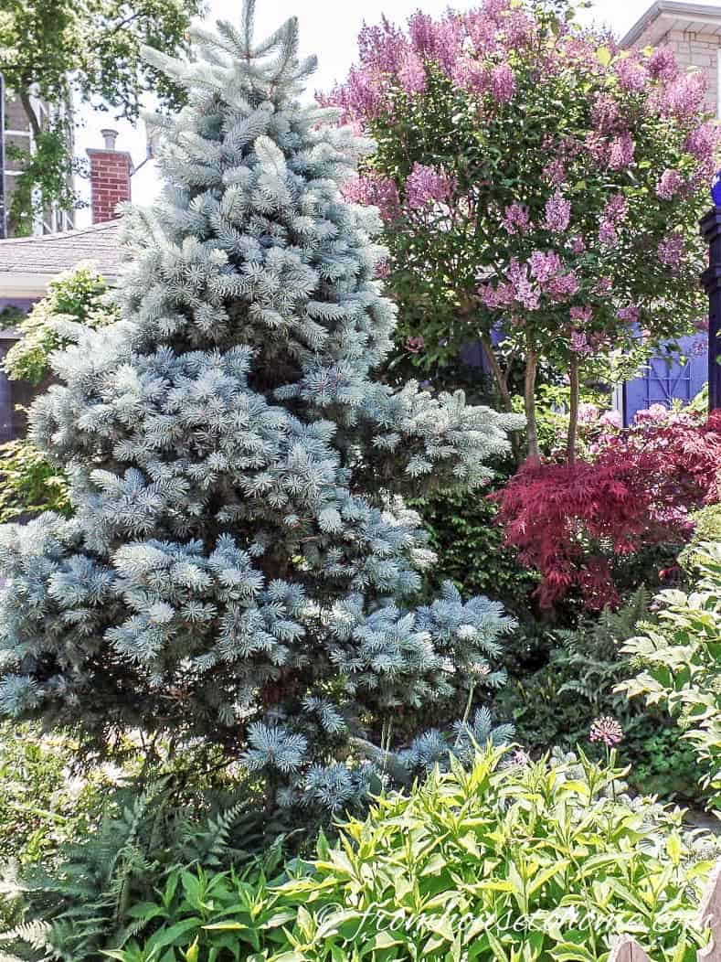 Consider the mature size of trees and bushes when you are creating your garden plan