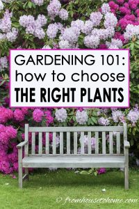 How to choose the right plants