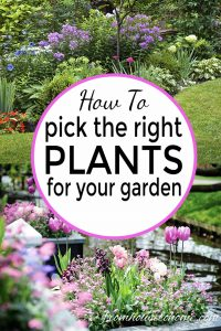 How to pick the right plants for your garden
