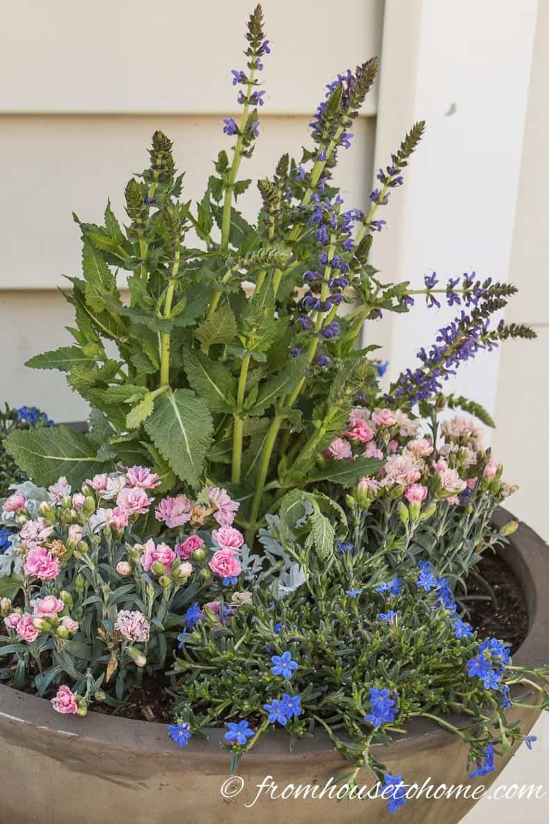 The plants will seem a little crowded but that's how the lush look is achieved | The No-Fail Method for Planting Beautiful Containers | I use this formula to plant all of my outdoor containers. It never fails to produce beautiful planters that are easy to create.