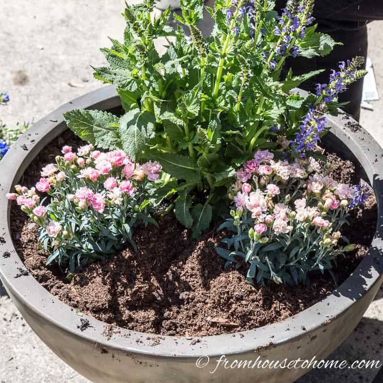 Add fillers | The No-Fail Method for Planting Beautiful Containers | I use this formula to plant all of my outdoor containers. It never fails to produce beautiful planters that are easy to create.