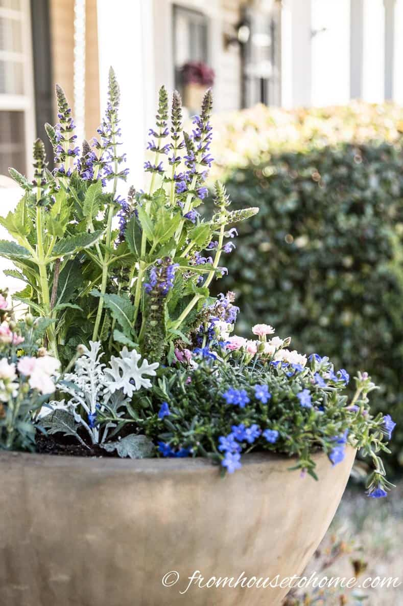 Spillers trail over the edges | The No-Fail Method for Planting Beautiful Containers | I use this formula to plant all of my outdoor containers. It never fails to produce beautiful planters that are easy to create.