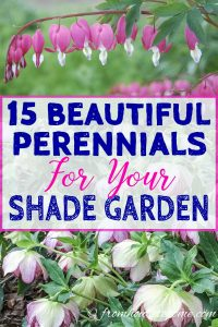 beautiful compact perennials for your shade garden
