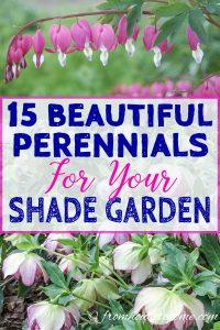 beautiful compact perennials for your shade garden