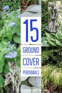 15 ground cover perennials