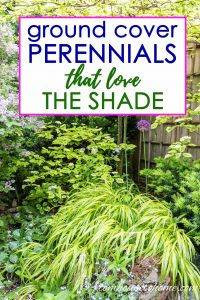 ground cover perennials that love the shade