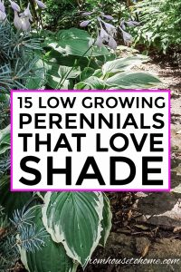 low growing perennials that love shade