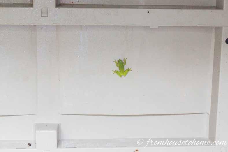 Tree frog in storage box